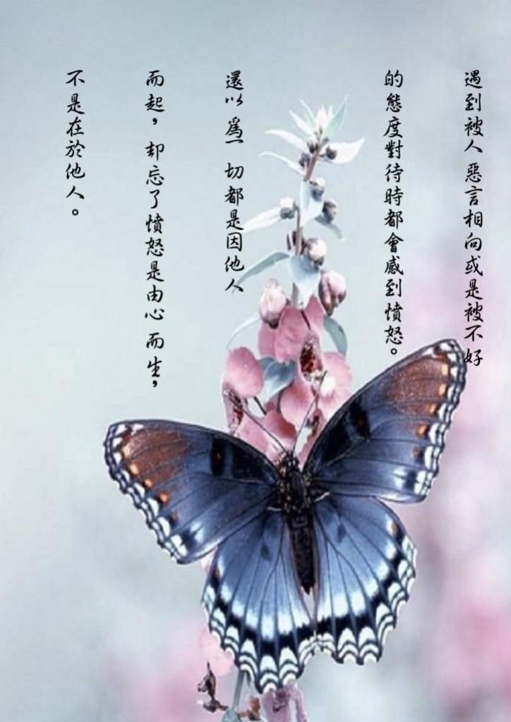 阿姜舒净语录 (55)